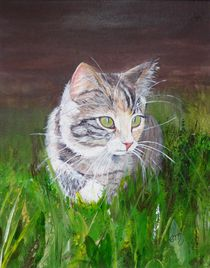 junge Katze auf Entdeckertour von Elisabeth Maier