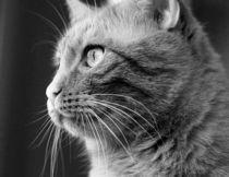 Katzenportrait by Torsten Reuschling