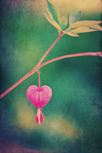 Love is in the air...   by AD DESIGN Photo + PhotoArt