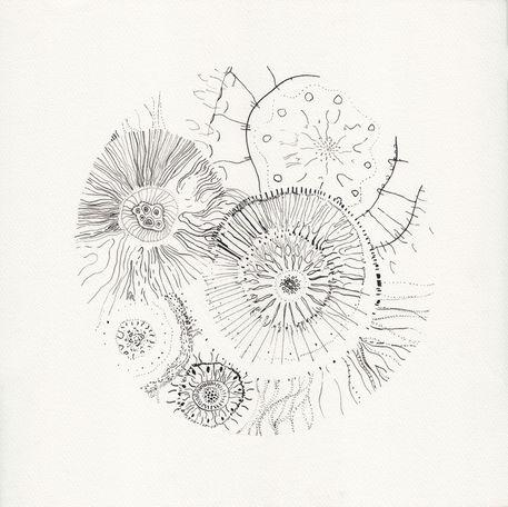 Micrografias-5
