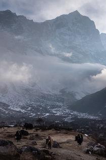 Yaks in Nepal by Florian Westermann