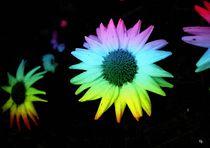 Rainbow Flowers by Heidi Piirto