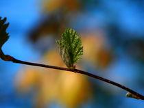 Erstes Grün
