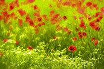 Poppyflower I von Tamme Maurer