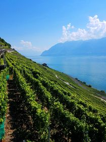 Lavaux Vineyard Terraces von susanbecruising