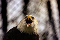 American Patriotic Eagle  by hottehue