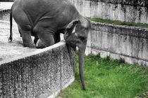 elephant, elephants eating von hottehue