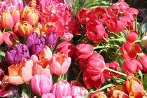 Tulpen in Pink von Raingard Göbel