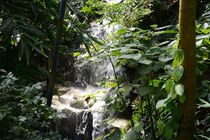 Wasserfall von Walter Root