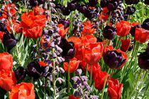 Tulpen von Walter Root