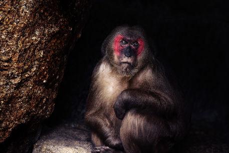 Monkey-05
