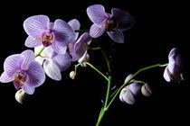 Orchideen by Christian Braun