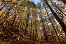Wald by Christian Braun