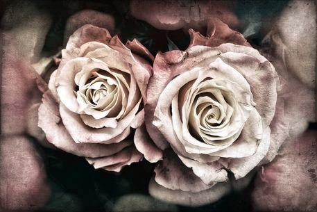 Rose-2017-002-e-3000
