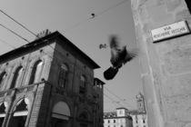Fly by Azzurra Di Pietro