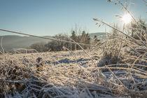 Winter im Sauerland von Simone Rein