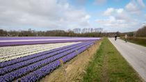 hyacinths 4 by Erik Mugira