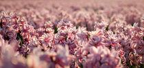 hyacinths 1 von Erik Mugira