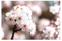 Blütentraum by Sandra  Vollmann