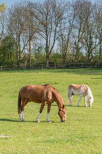 Pferde 45 von Erhard Hess