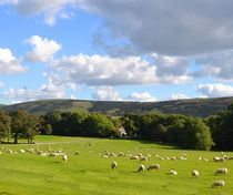 Schafswiese von Ute Bauduin