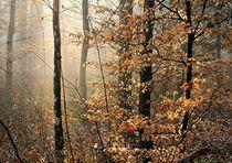 Licht im Wald 5 by Bruno Schmidiger