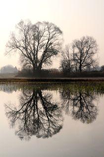 Gespiegelte Bäume von Bruno Schmidiger