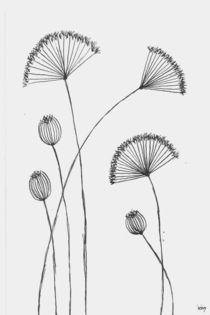 Umbelliferaceae by dieroteiris