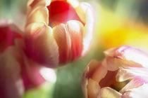 Spring Flowers von Petra Dreiling-Schewe