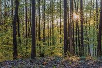Sonne im Wald by Christian Braun
