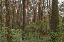 Sonnenstrahlen im Wald by Christian Braun