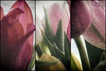 Tulip Parts by Petra Dreiling-Schewe
