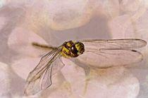 Flug der Libelle von Petra Dreiling-Schewe