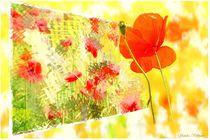 Mohnblumen von Sandra  Vollmann