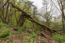 Baum von Christian Braun