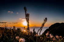 Thistles in Sunset by Richard Gruber