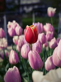 Bunte Tulpen by Wladimir Zarew
