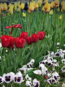 Frühlingsblümen  by Wladimir Zarew