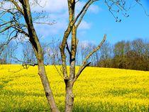 Frühling - 2 von Zarahzeta ®