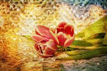 Die Tulpen von Claudia Evans