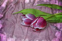 Rosa Tulpen von Claudia Evans