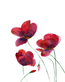 Poppies by mikart