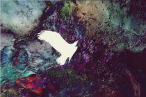 Farbenflug von Daniel Klein