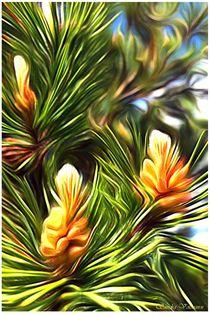 Natur Details Kiefer von Sandra  Vollmann