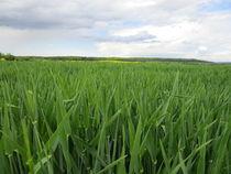 Getreidefeld  von Tanja Wende
