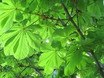 Kastanienenbaum von Tanja Wende
