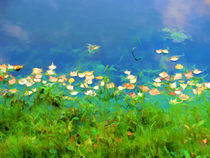 Autumn leaves on water 4 by lanjee chee