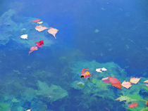 Fall leaves on river 3 by lanjee chee