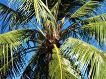 Kokospalme und blauer Himmel by assy