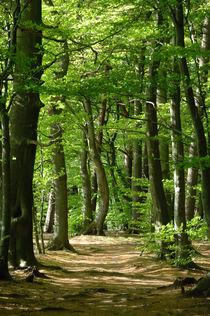 Wanderweg im Buchenwald im Mai von Heinrich Winkelmann